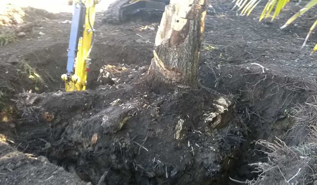 96-Stump-1