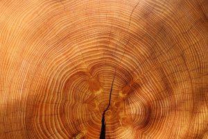 wood tree spruce