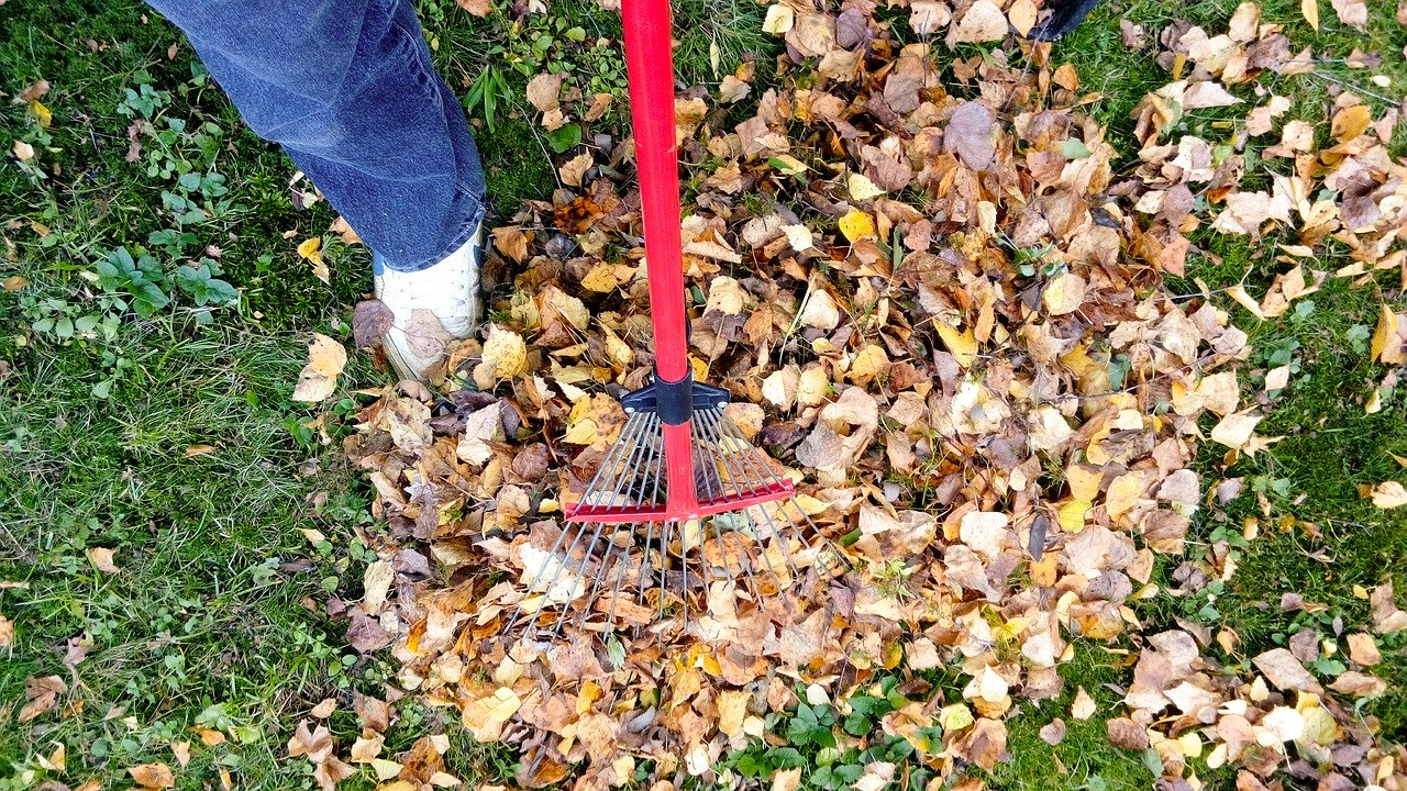 Big Yard Cleaning Jobs Reqire A Professional Approach